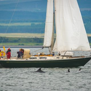 The Best Place to Watch Dolphins in Scotland - find out exactly where to go and the best times to visit!