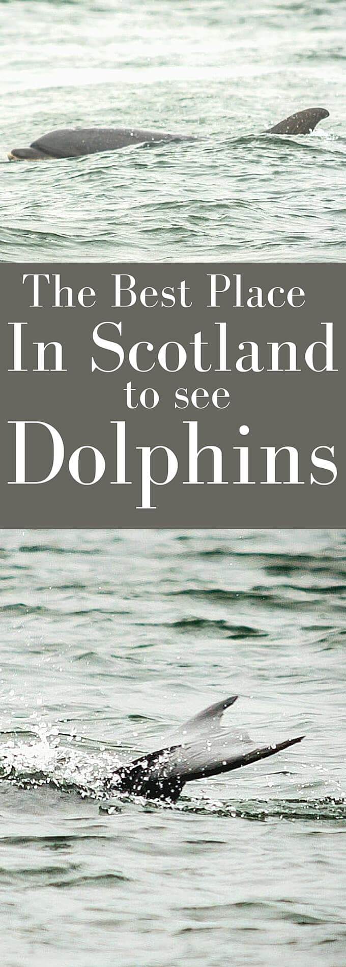 The best place to watch Dolphins in Scotland is at Chanonry Point in the Moray Firth. Read my post to get ALL the details you need to make sure you have the best chance of seeing them!